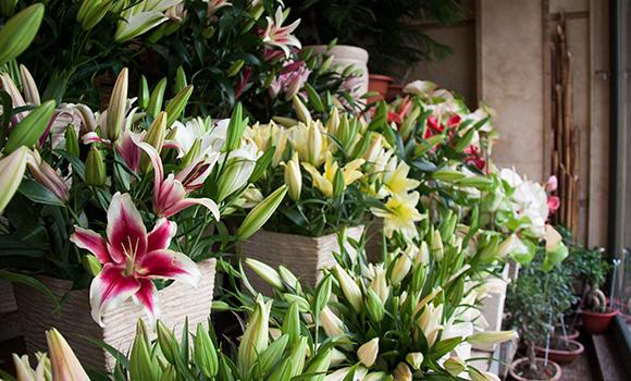 Bahar Flower Shop